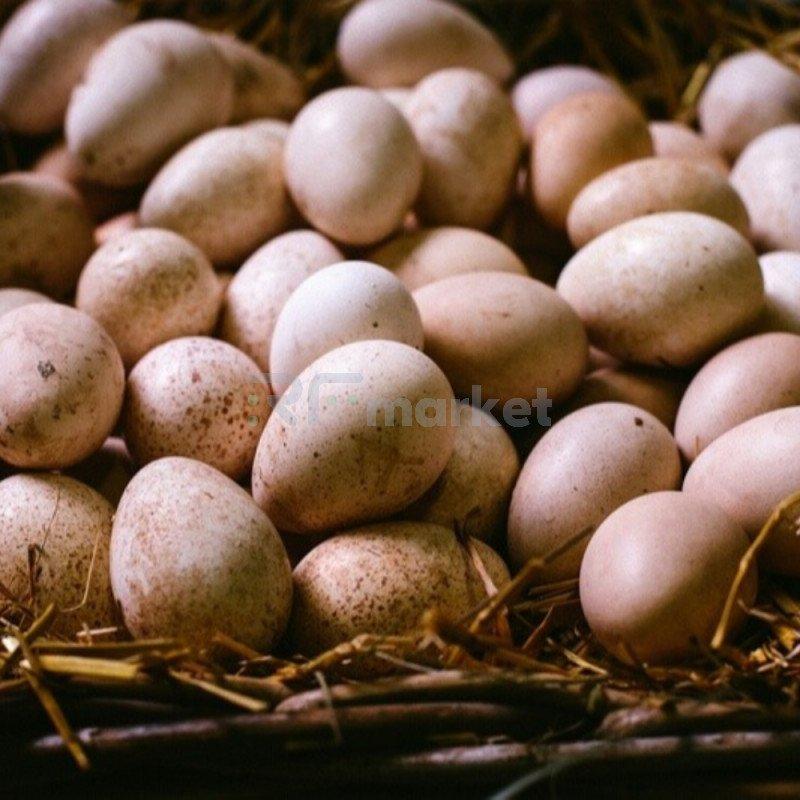 Яйца цесариные, фермерские, 10 шт.