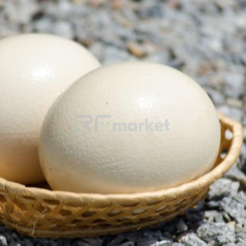 Яйцо страуса, 1 шт