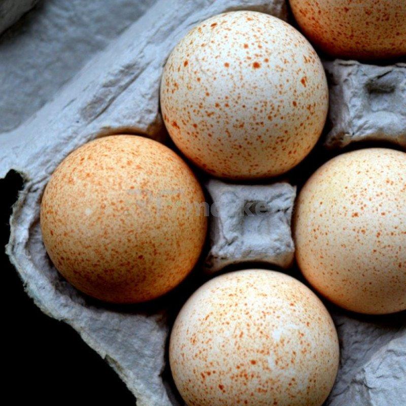 Яйцо индюшиное, 10 шт